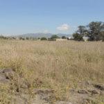Copia de Rancho Coapa El Peral Cuautitlan_6 copia